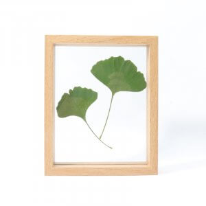 Nature Display Frames by Malaysia Toys
